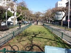 Rothchild Boulevard, Tel Aviv